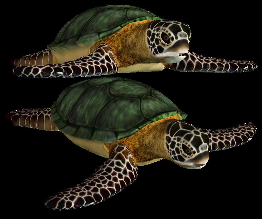 Sea Turtle PNG Stock