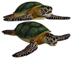Sea Turtle PNG Stock by Roy3D