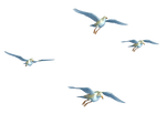 Flying Birds 01 PNG Stock