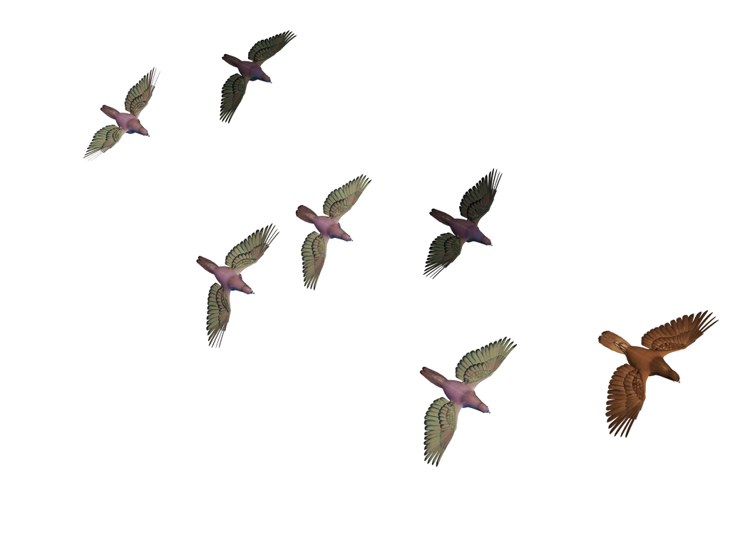 Flying Birds 03 Png Stock 417599096