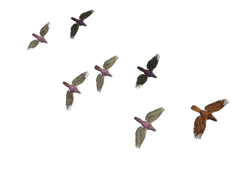 Flying Birds 03 PNG Stock