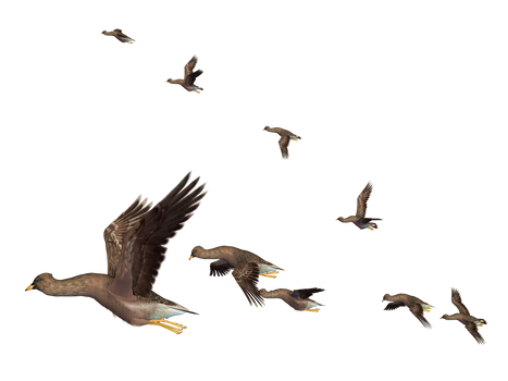 Flying Birds 05 PNG Stock