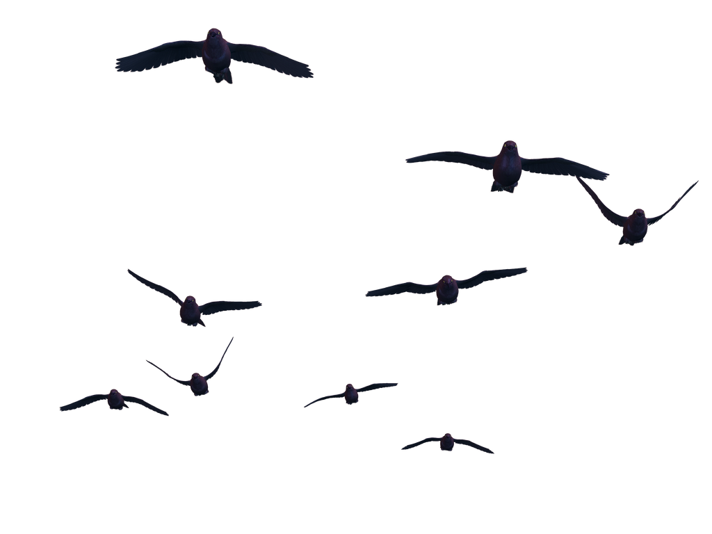 Flying Birds 07 Png Stock by