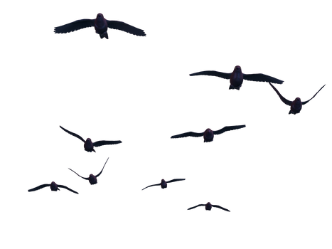 Flying Birds 07 PNG Stock