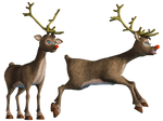 Rudolf PNG Stock