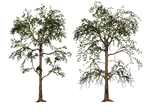 Trees 01 PNG Stock