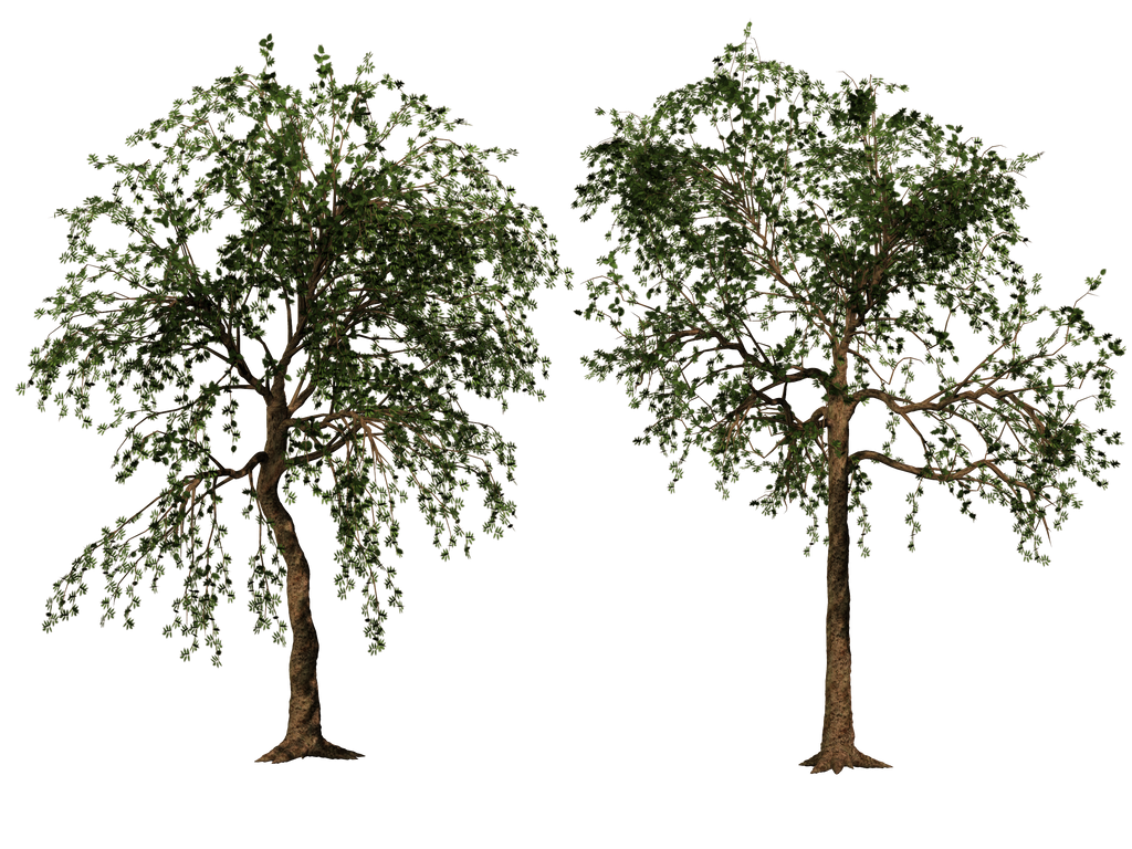 Trees 02 PNG Stock by Roys-Art on DeviantArt - photo#28