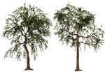 Trees 02 PNG Stock
