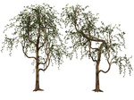 Trees 03 PNG Stock