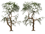 Trees 04 PNG Stock