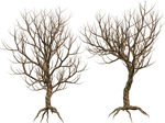 Trees 07 PNG Stock