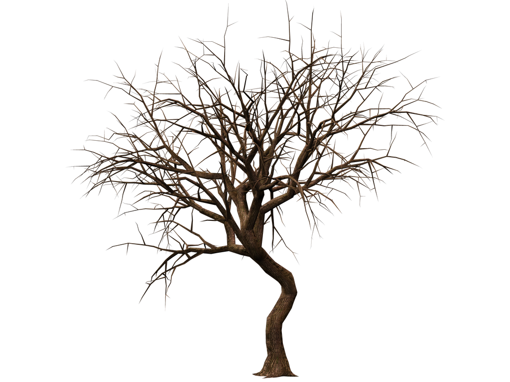 Trees 08 PNG Stock