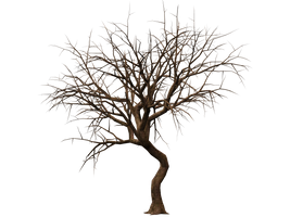 Trees 08 PNG Stock by Roy3D