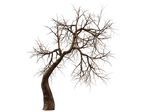 Trees 10 PNG Stock