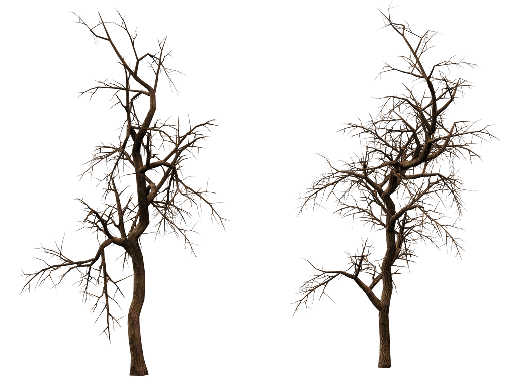 Trees 12 PNG Stock