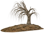 Trees 13 PNG Stock