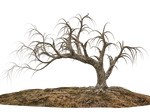 Trees 14 PNG Stock
