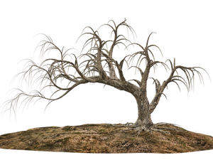 Trees 14 PNG Stock by Roy3D