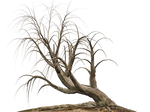 Trees 16 PNG Stock