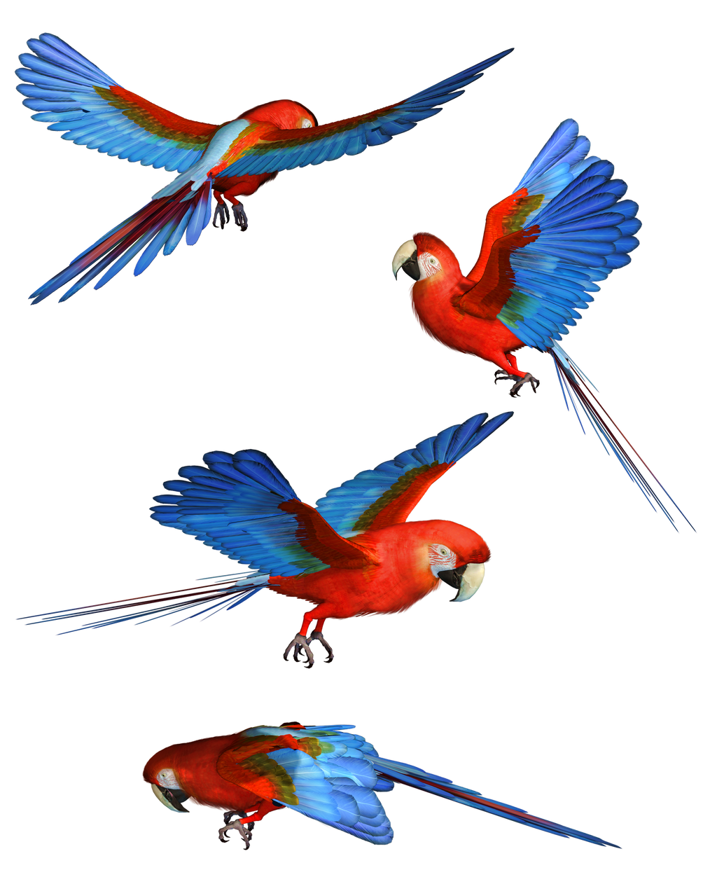 Scarlet Macaw PNG Stock by Roys-Art