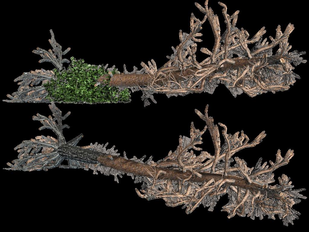 سكرابز اشجار صور اشجار للتصميم سكرابز شجر png صور اشجار fallen_trees_02_png_stock_by_jumpfer_stock-d7jk7h6.png