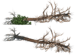 Fallen Trees 02 PNG Stock