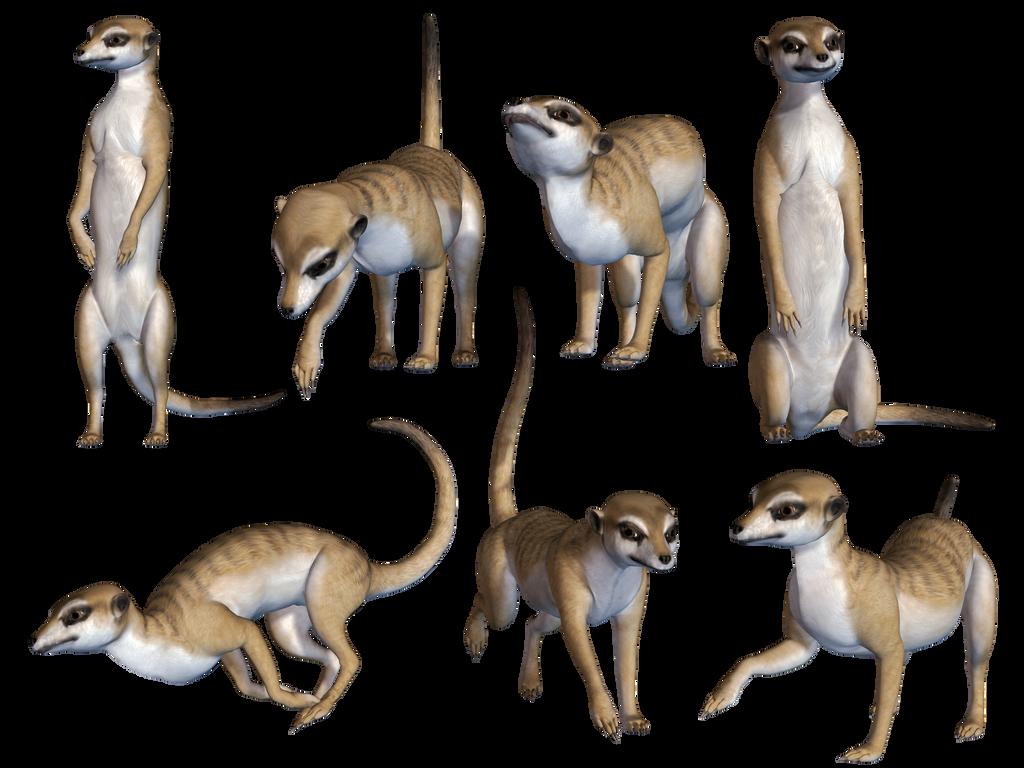 Meerkats PNG Stock by Roy3D
