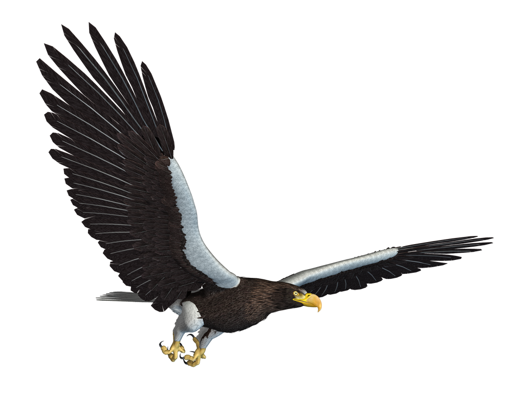 Sea Eagle 02 PNG Stock by Roy3D on DeviantArt