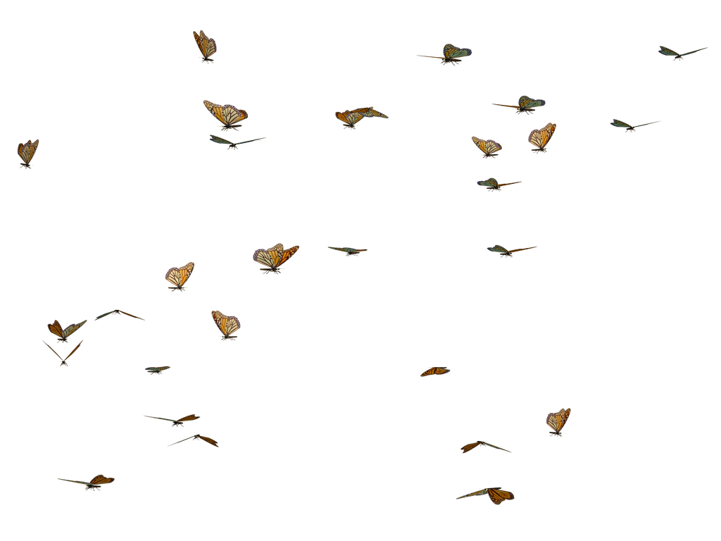 Butterfly Swarm 02 PNG Stock