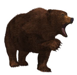 Brown Bear 01 PNG Stock