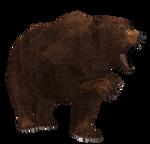 Brown Bear 01 PNG Stock