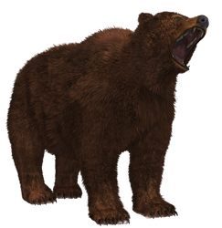 Brown Bear 02 PNG Stock by Roy3D