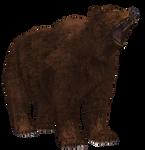 Brown Bear 02 PNG Stock