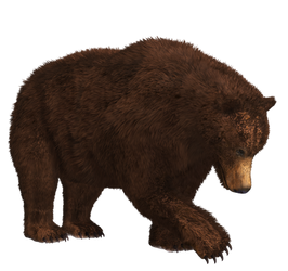 Brown Bear 03 PNG Stock