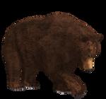 Brown Bear 03 PNG Stock
