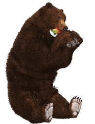 Brown Bear 04 PNG Stock