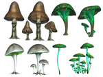 Magic Mushrooms PNG Stock