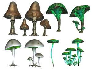 Magic Mushrooms PNG Stock
