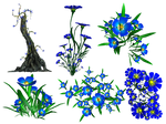 Forget Me Not PNG Stock