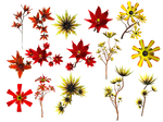 Lilies PNG Stock