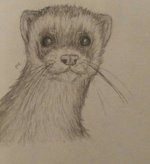 Old ferret drawing 2