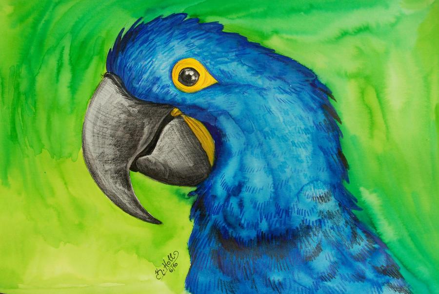 Blue Macaw Drawing Hyacinth Macaw Drawing