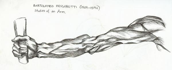 Arm Study by puckatdeviantart
