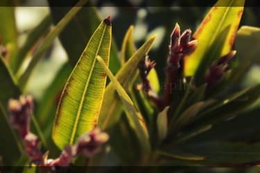 Leaf by LeT-PL