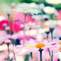 summer by juul07