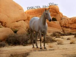 Dakota Sands