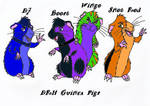 DRH guinea pigs