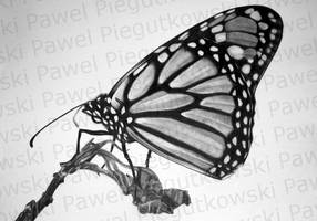 butterfly-1 by PEPEi