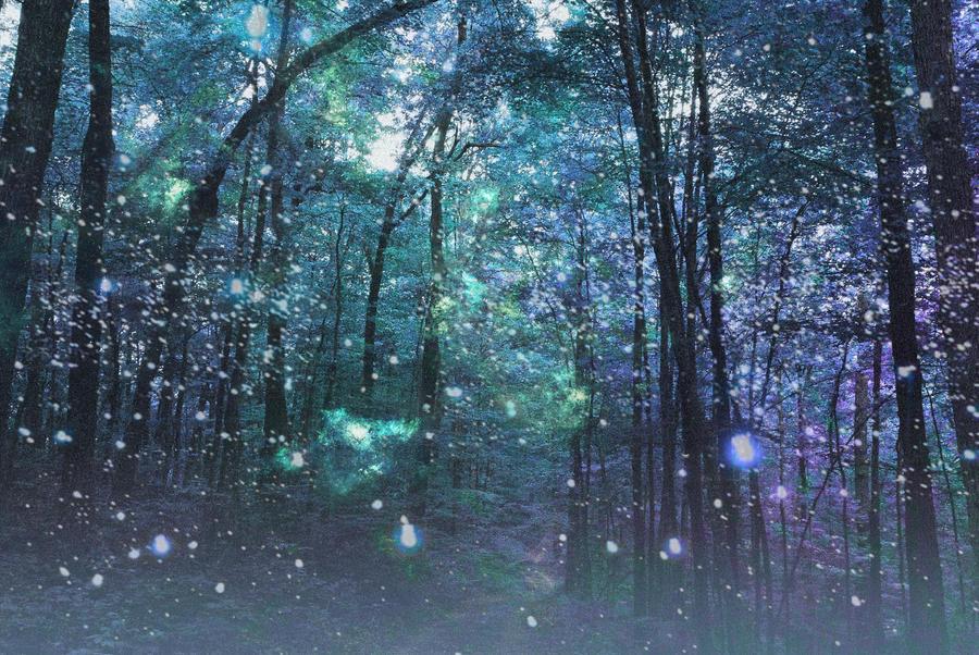 enchanted forest background - photo #28