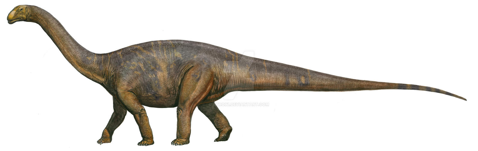 cetiosaurus by atrox1